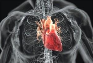 heart-425x289